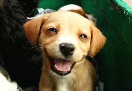 happy-smile