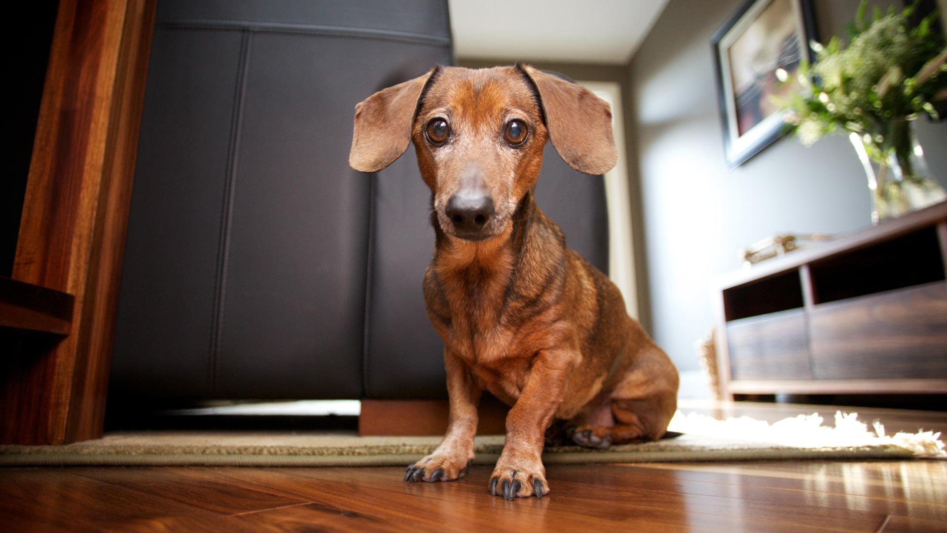 help-my-friends-say-my-house-smells-like-a-dog